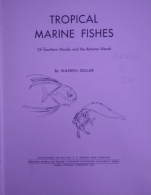 tropical marine fishes
